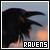 Ravens ♥