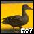 Ducks ♥