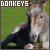Donkeys ♥